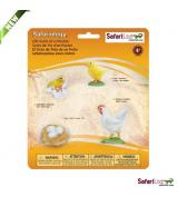 Safari Ltd Life Cycle Of A Chicken